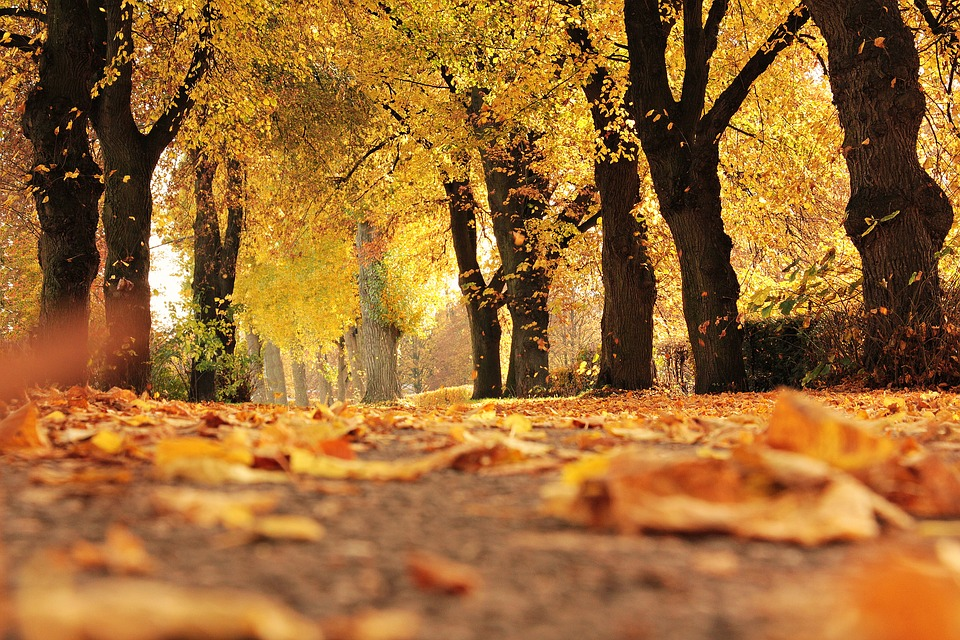 Free photo Mood Autumn Fall Leaves Outdoor Away Avenue Trees.