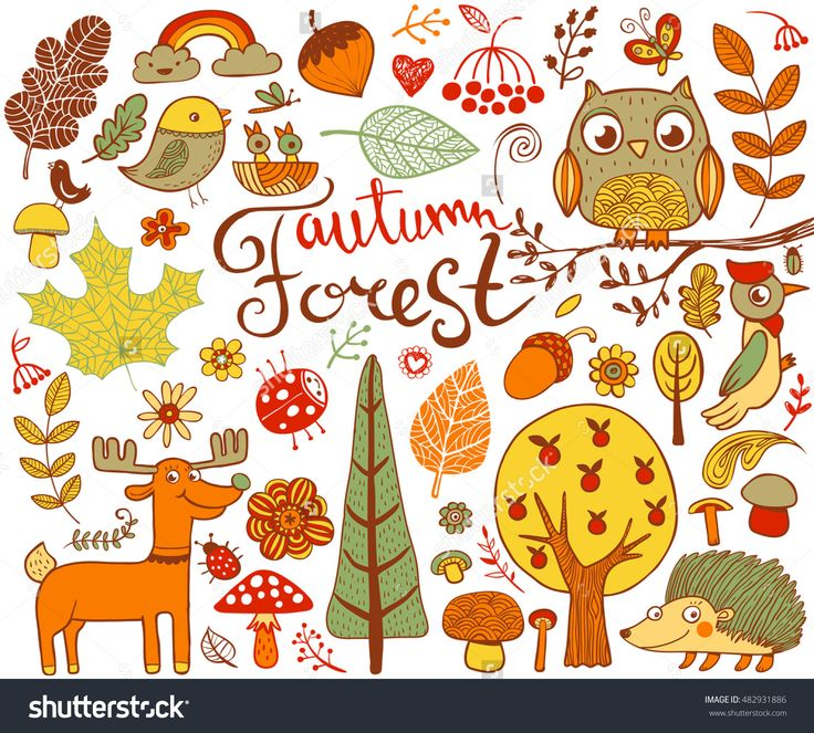 1000+ ideas about Autumn Forest on Pinterest.