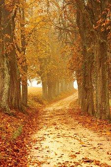 Fall, Foliage.