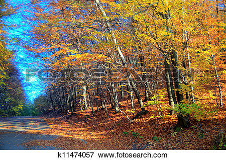 Picture of beautiful autumn mood k11474057.