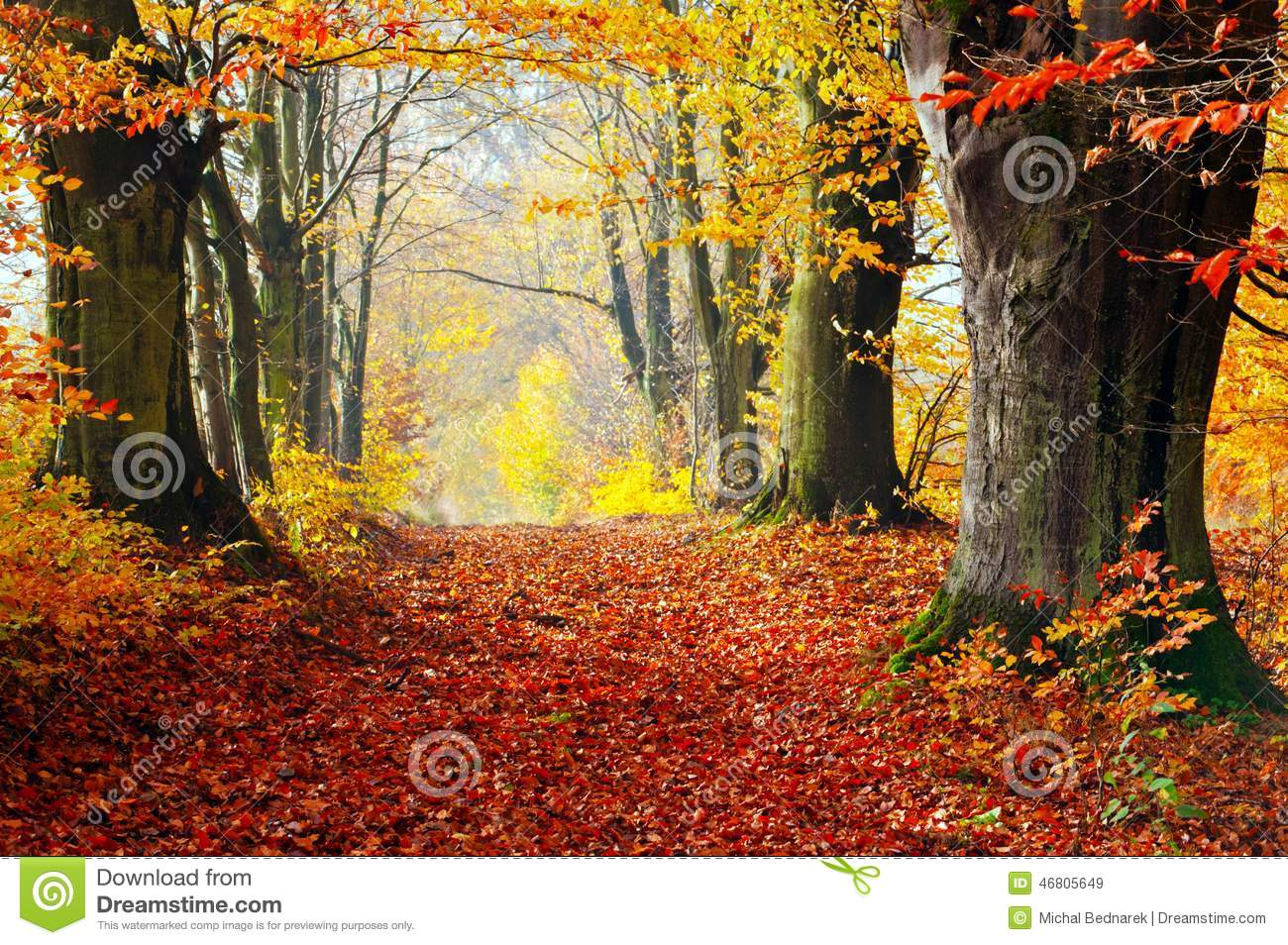 Autumn, Fall Forest. Path Of Red Leaves Towards Light. Stock Photo.