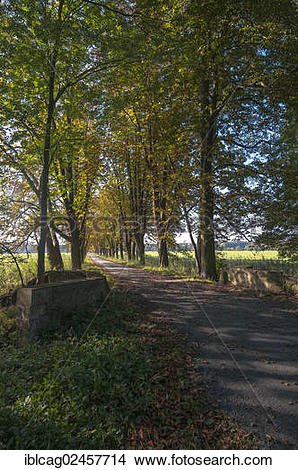 "Stock Photo of ""Autumn mood, path lined with horse chestnut trees."