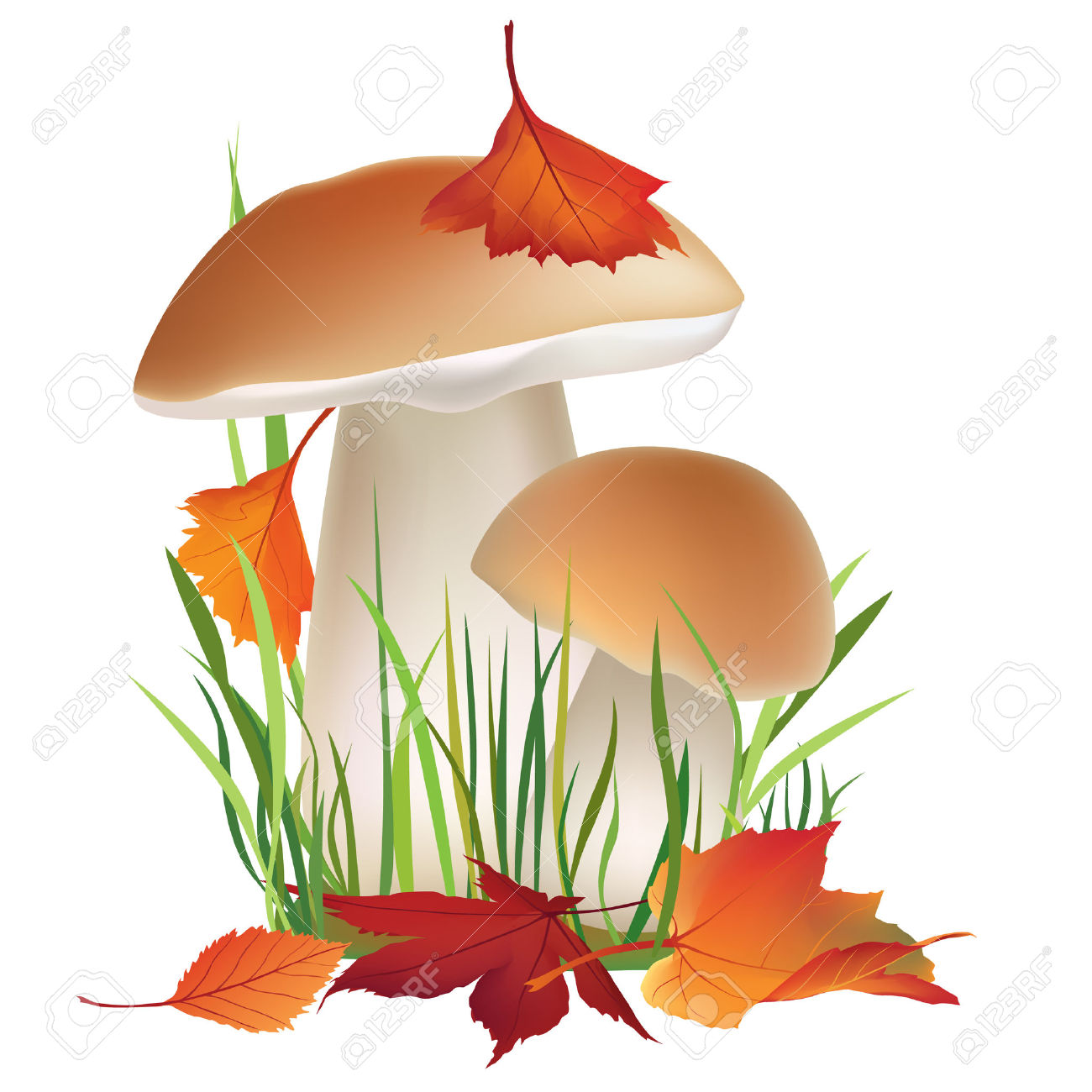 Autumn mushrooms clipart  Clipground