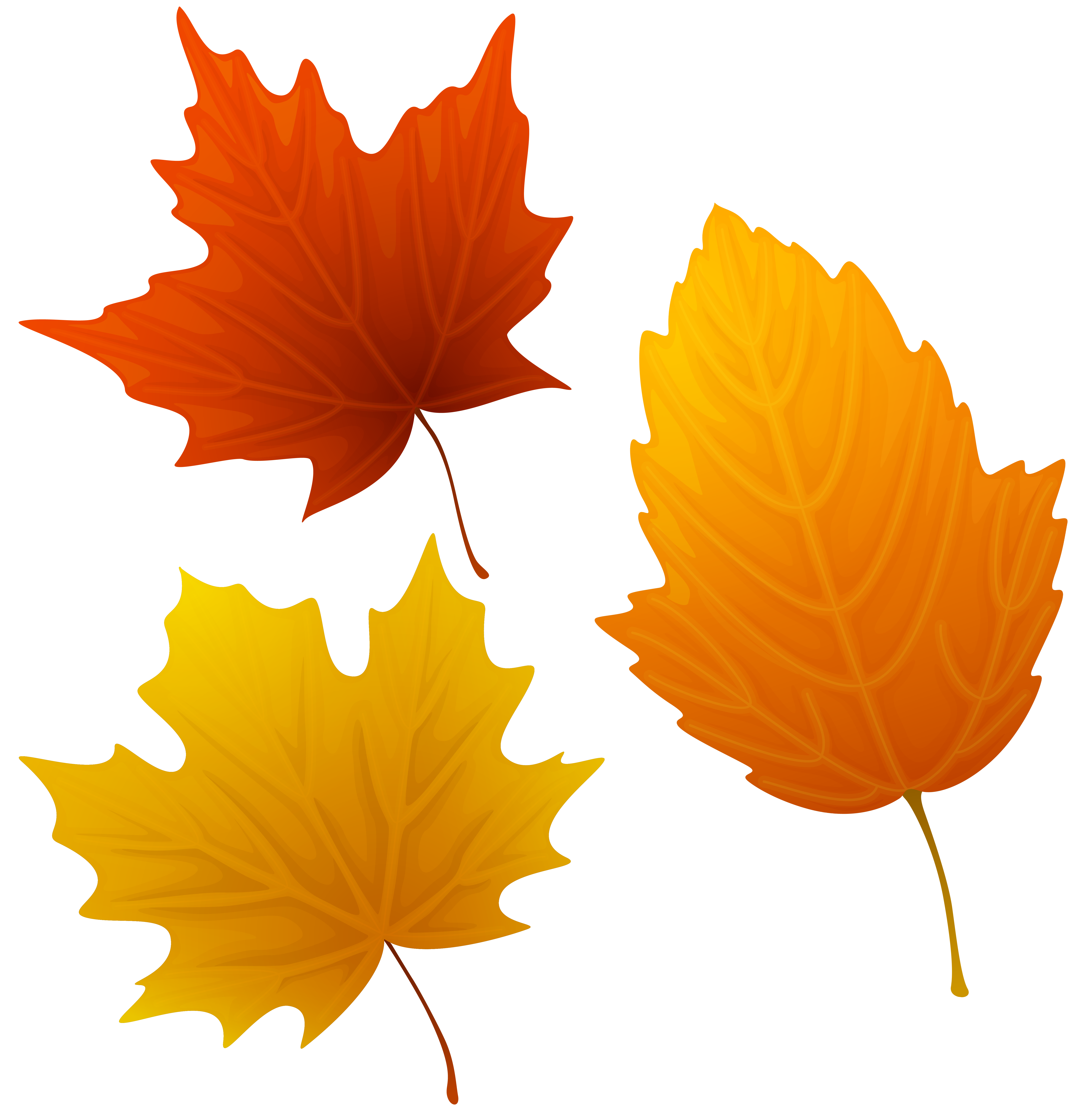 Set of Autumn Leaves Clipart PNG Image.