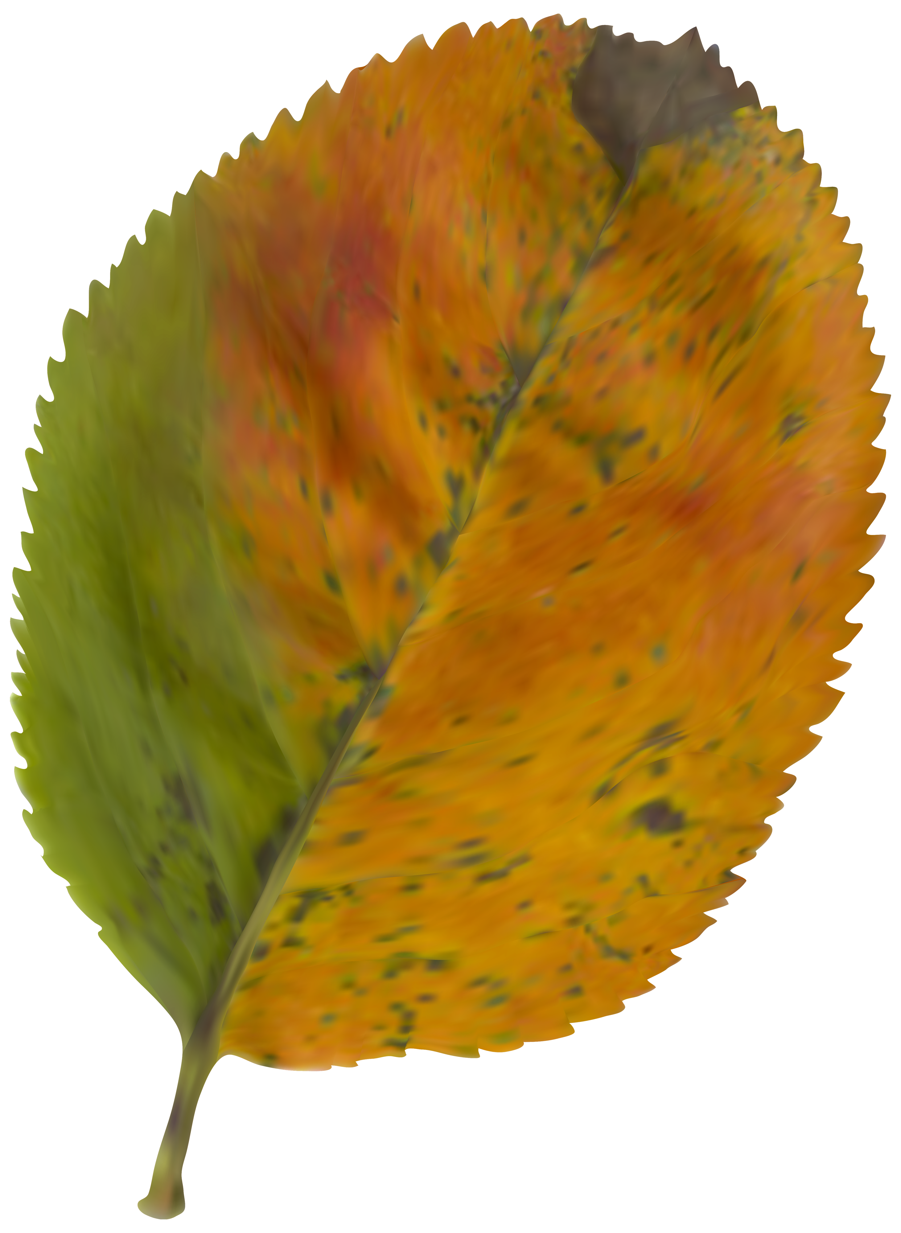 Beautiful Autumn Leaf PNG Clipart Image.