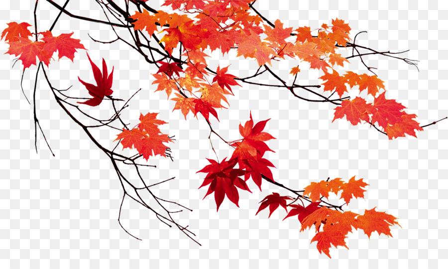Autumn Leaf Color Maple Leaf.