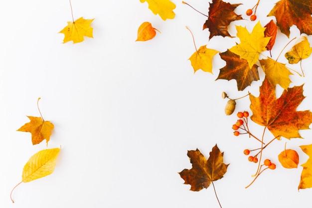 Autumn Vectors, Photos and PSD files.