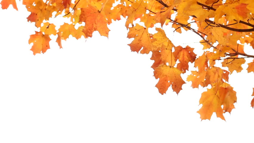 Autumn Leaves HD PNG Transparent Autumn Leaves HD.PNG Images..