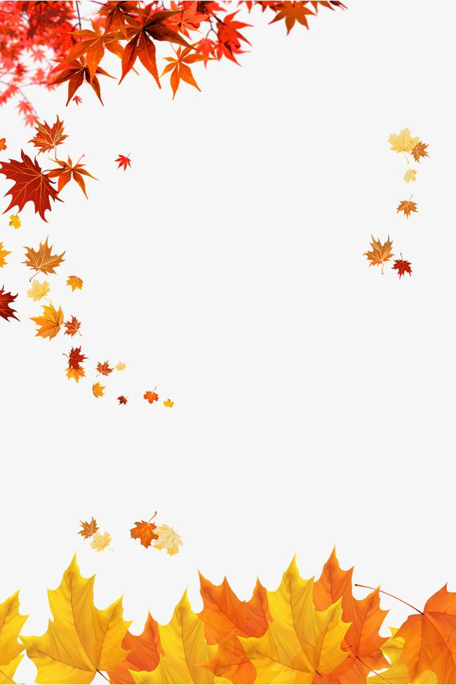 Maple Leaves, Autumn, Golden Fall PNG Transparent Clipart Image and.