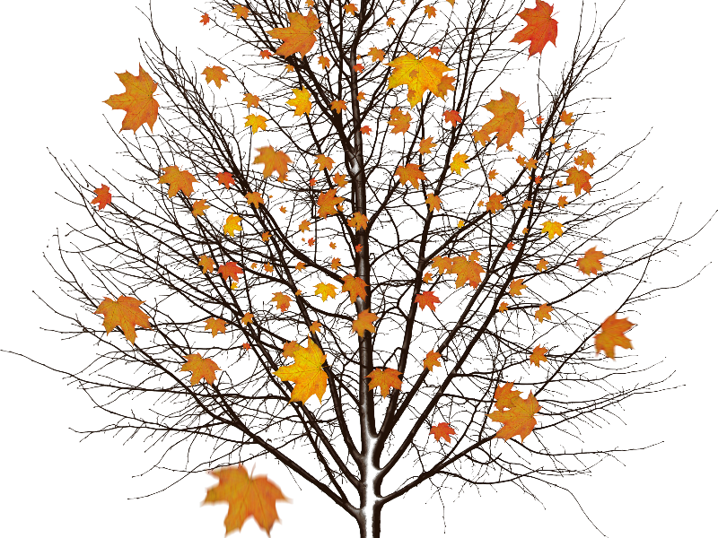 Autumn Tree With Leaves Isolated Object Png (Isolated.