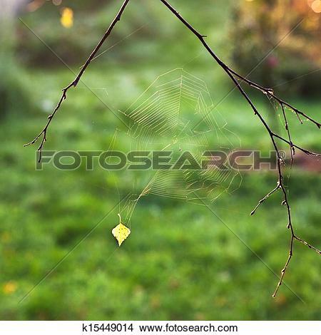 Stock Photo of autumn sun lights spider web k15449014.