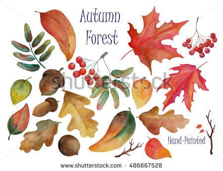 Autumn Berries Stock Photos, Royalty.