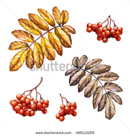 Brown Leaf Clipart Stock Photos, Royalty.