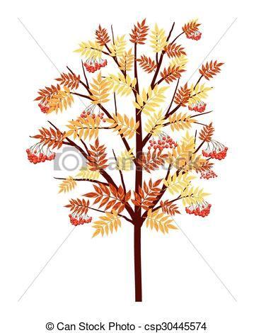 Autumn Rowan Tree.