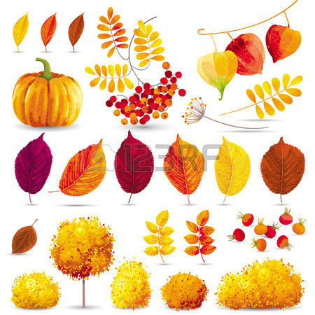 258 Berry Physalis Stock Vector Illustration And Royalty Free.
