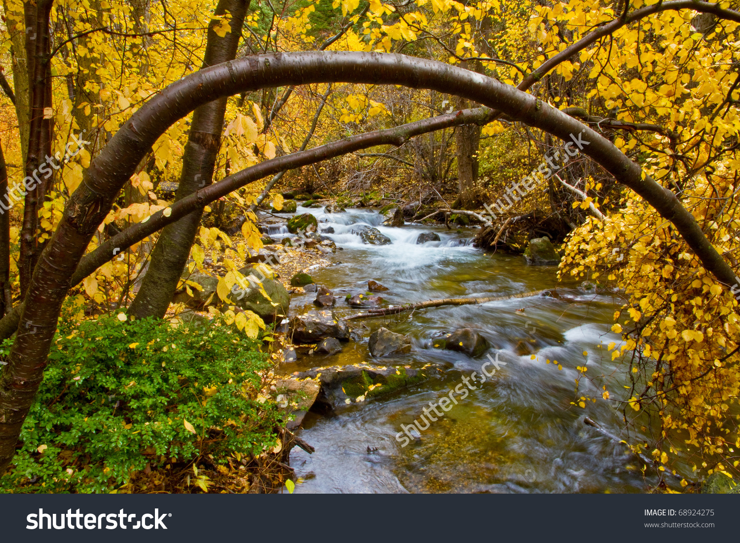 Autumn River Birch Tree Arches Over Stock Photo 68924275.