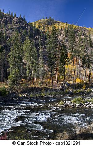 Stock Photography of Fall Colors Wenatchee River Yellow Trees.