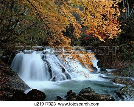 Stock Photo of Autumn Trees Near Stream u21917023.