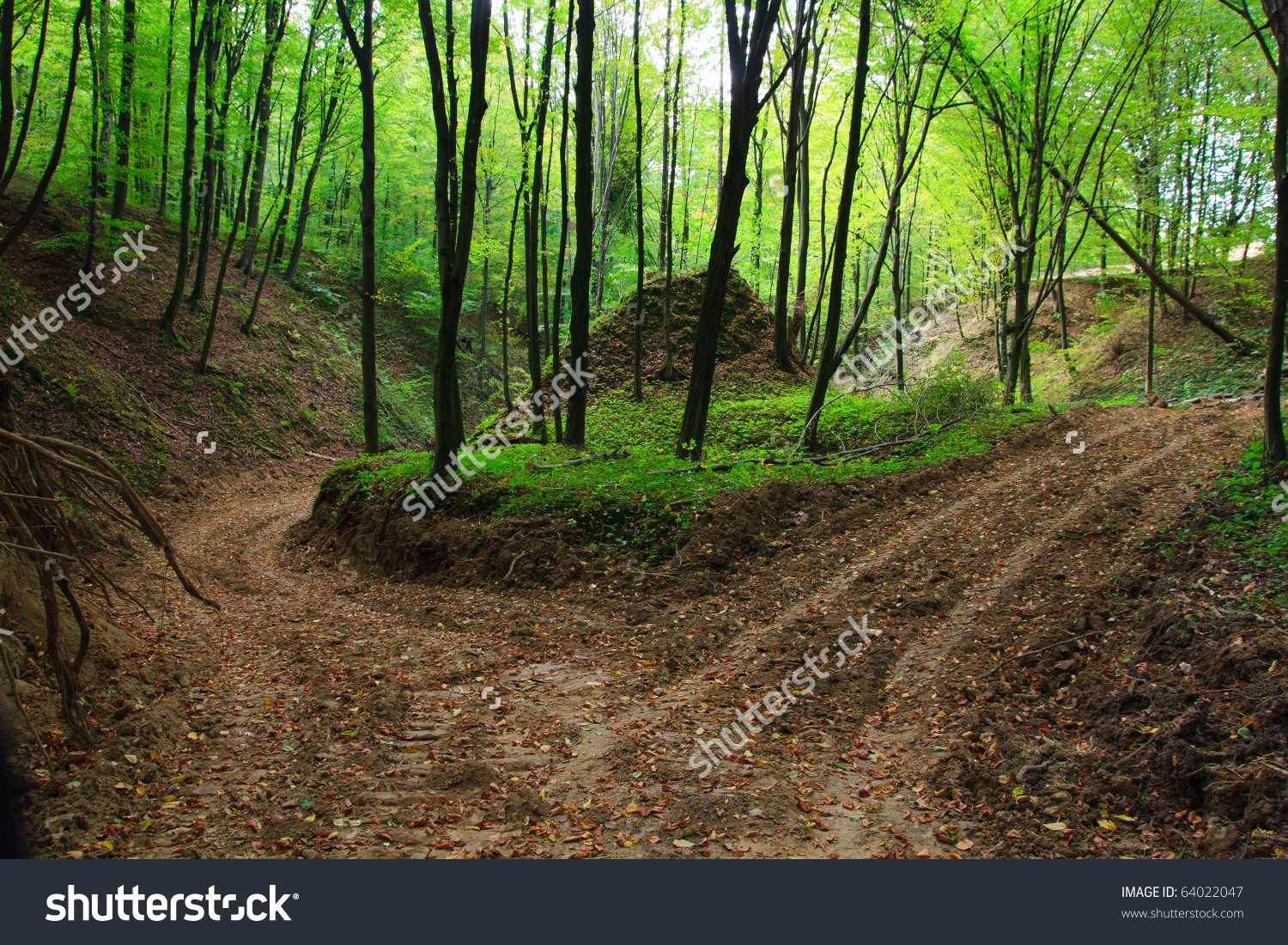 Muddy Forest Road Autumn Ravine Colourful Stock Photo 64022047.