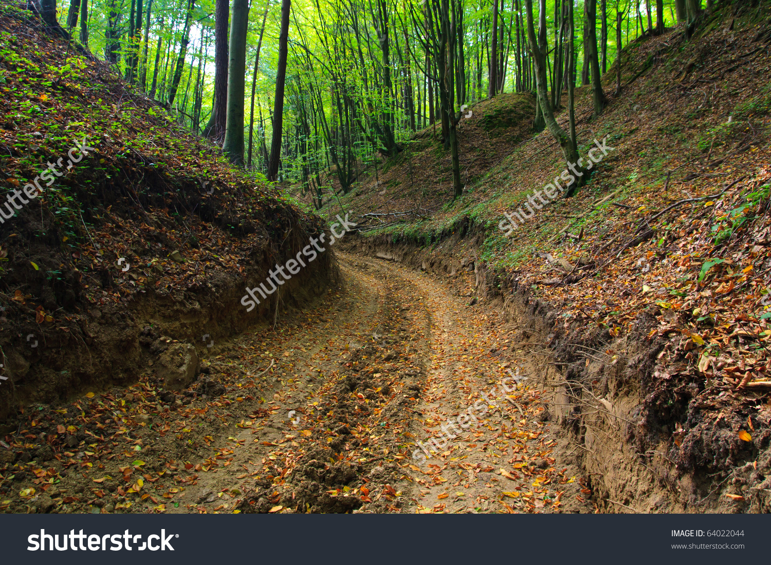 Muddy Forest Road Autumn Ravine Colourful Stock Photo 64022044.