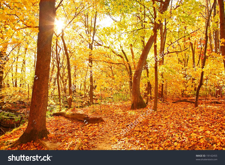 Autumn Woods Stock Photo 19142455.
