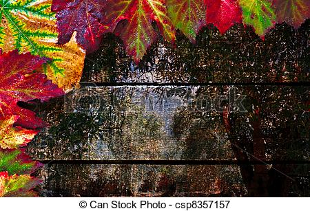 Picture of Colorful wet autumn leaves with autumn woods in.