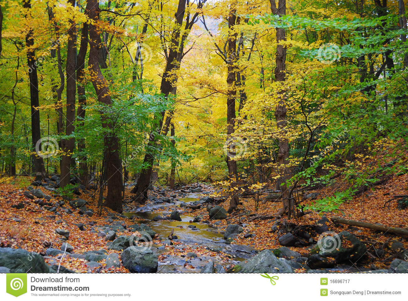 Autumn Woods And Creek Royalty Free Stock Photography.