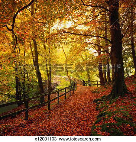 Stock Photo of Trail through Autumn Woods x12031103.