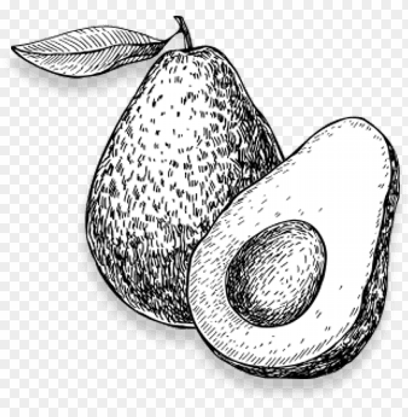 black and white picture of avocado PNG image with.