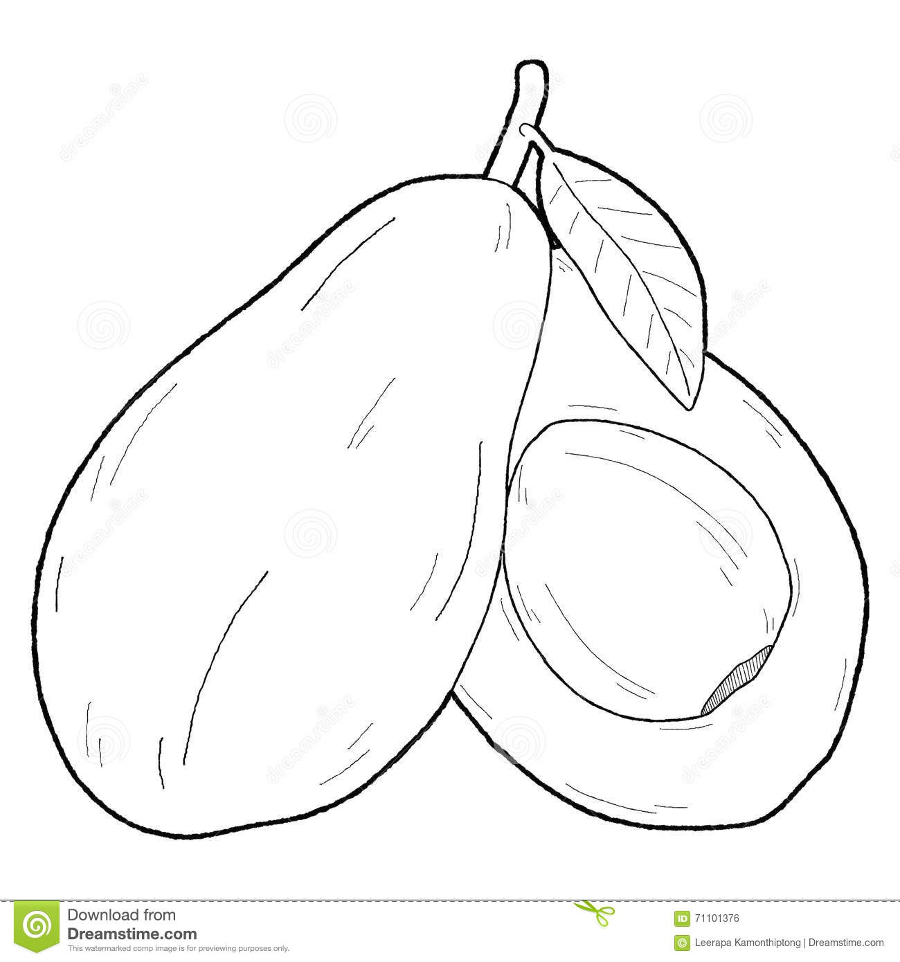 Avocado black and white clipart 6 » Clipart Station.