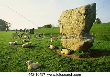 Picture of Stones and a flock of sheep in a pasture, Avebury Stone.