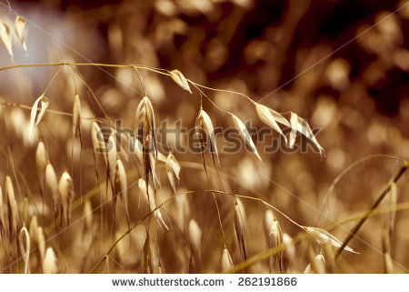 Brown Grass Stock Photos, Royalty.
