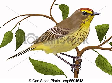 Aves Illustrations and Clipart. 771 Aves royalty free.