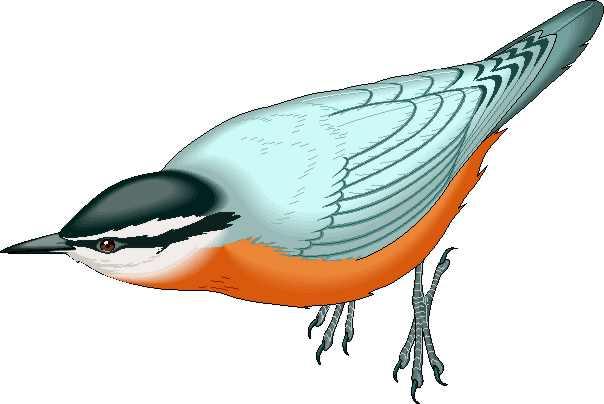 De Imagenes De Aves Para Diseno Web Descarga Clipart De Aves.