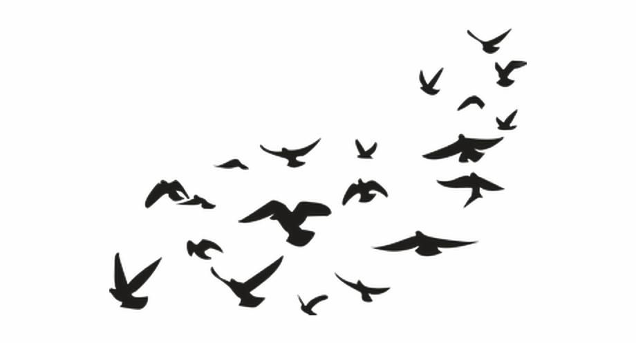 Pajaros Palomas Aves Negro Picsart Png Stickers.