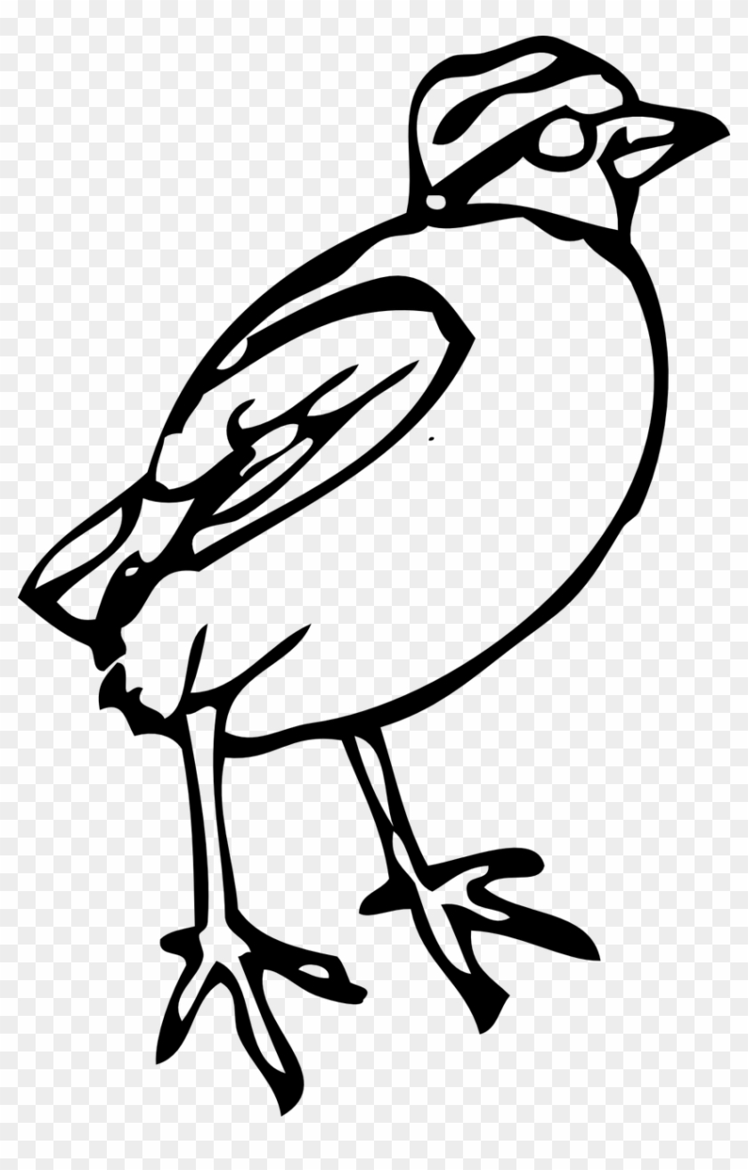 Bird Chick Peep Fowl Aves Png Image.