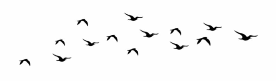 Aves Sticker Flock.