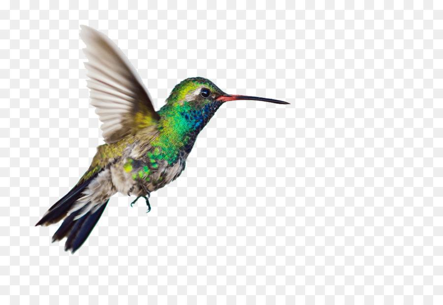 Colibrí, Aves, Fondo De Escritorio imagen png.