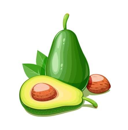18,865 Avocado Stock Vector Illustration And Royalty Free Avocado.
