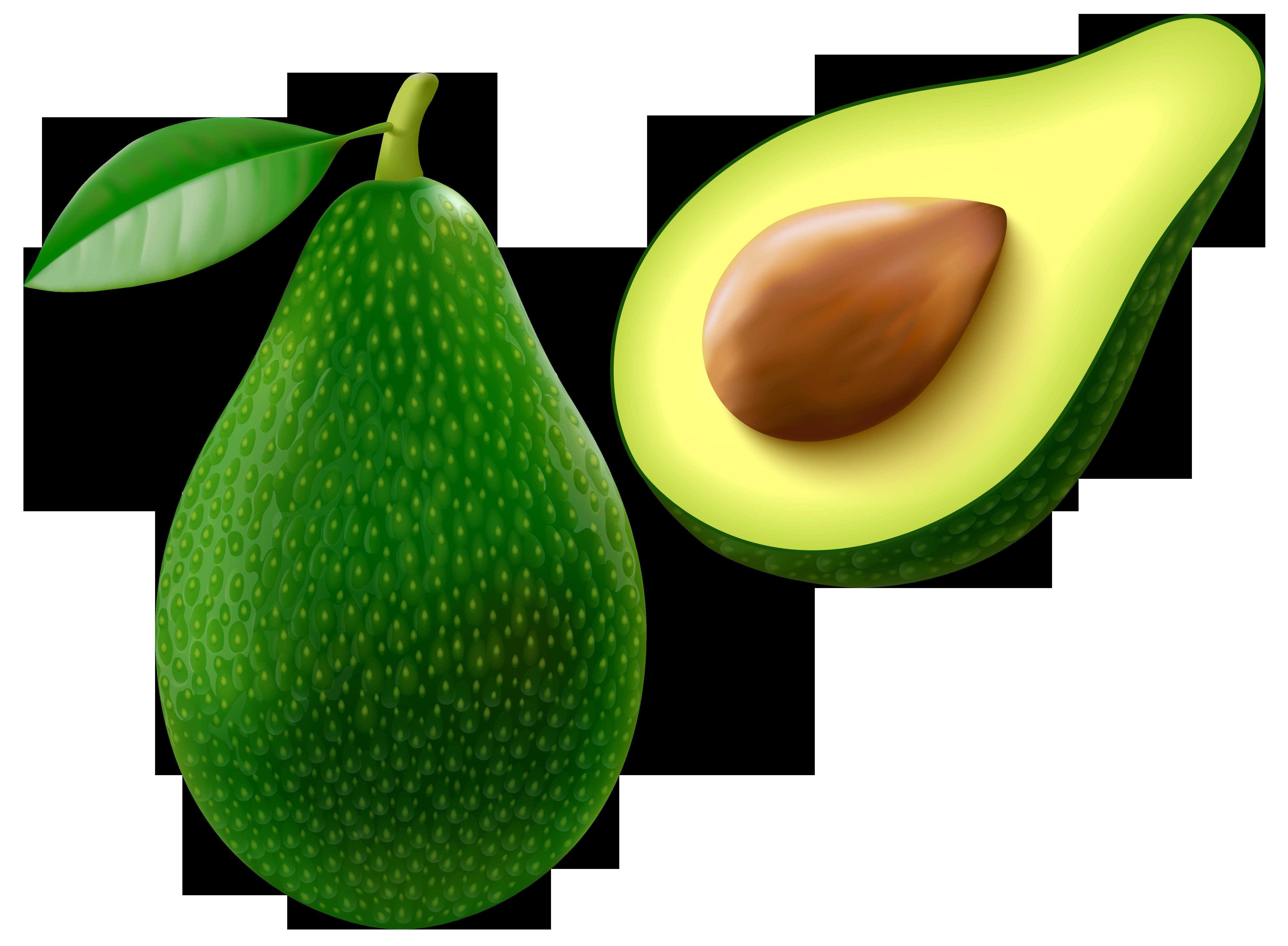 Avocado pictures clip art.