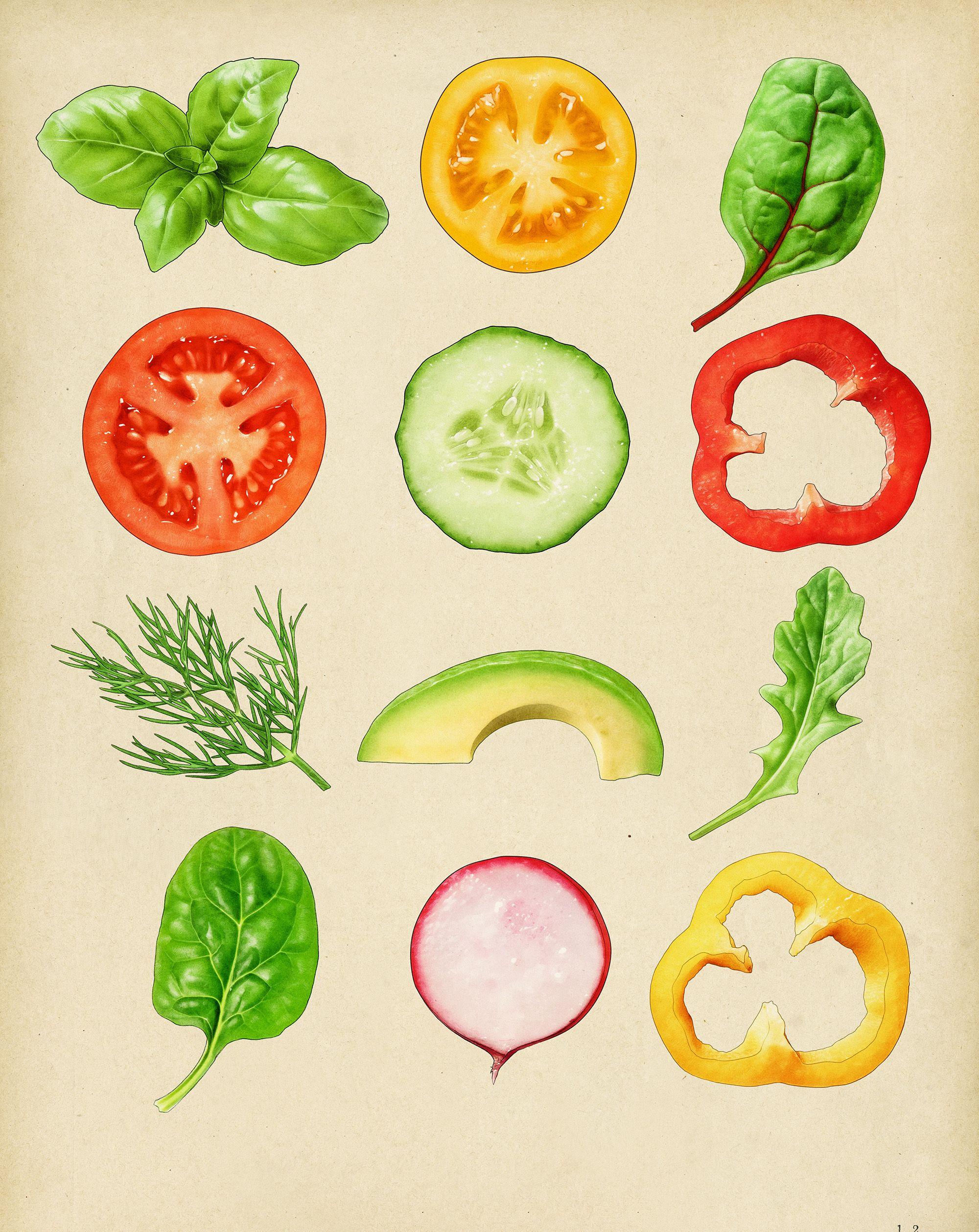 vegetable illustrations for sandwich packaging Parsons.