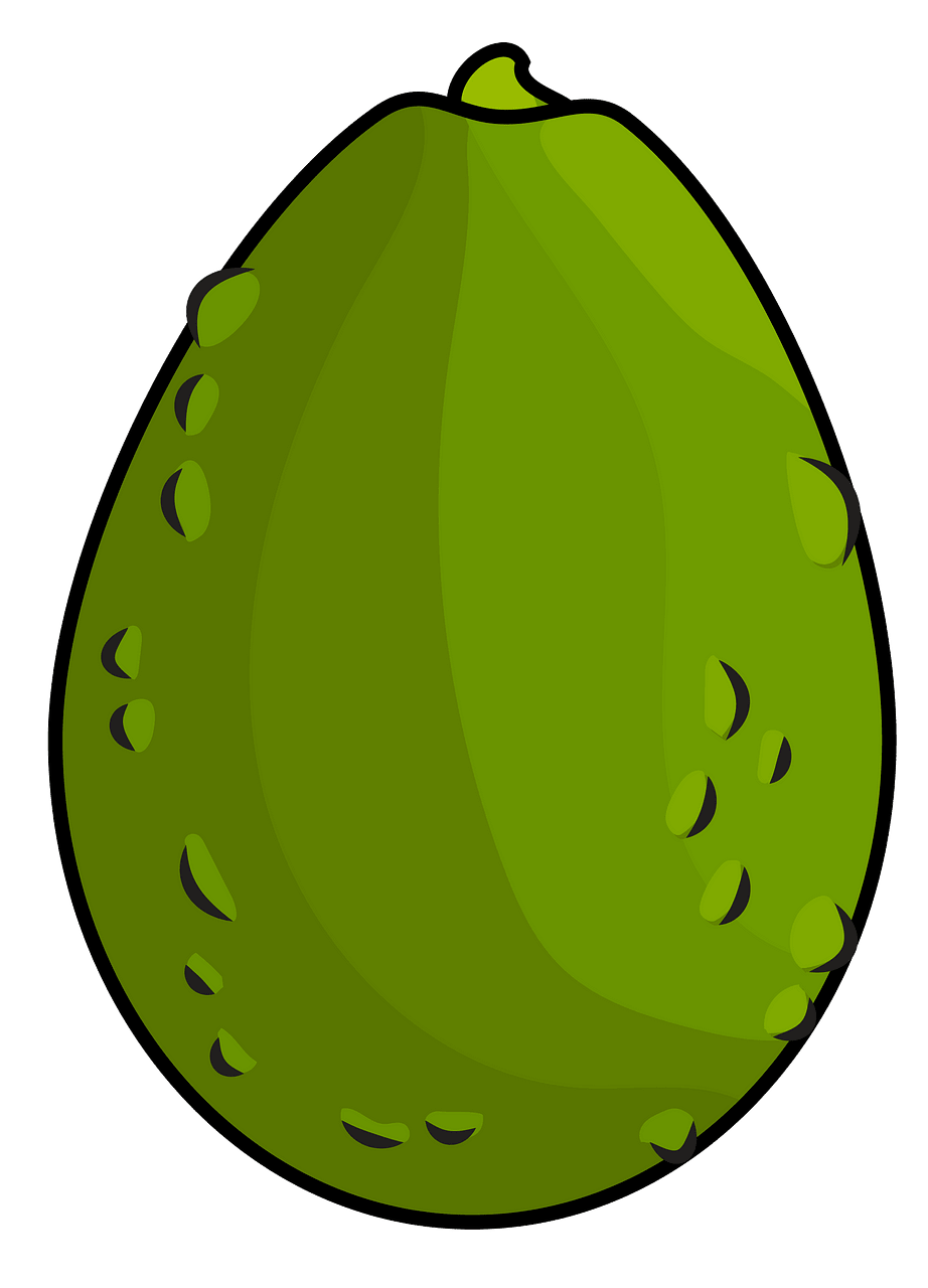 Avocado clipart. Free download..