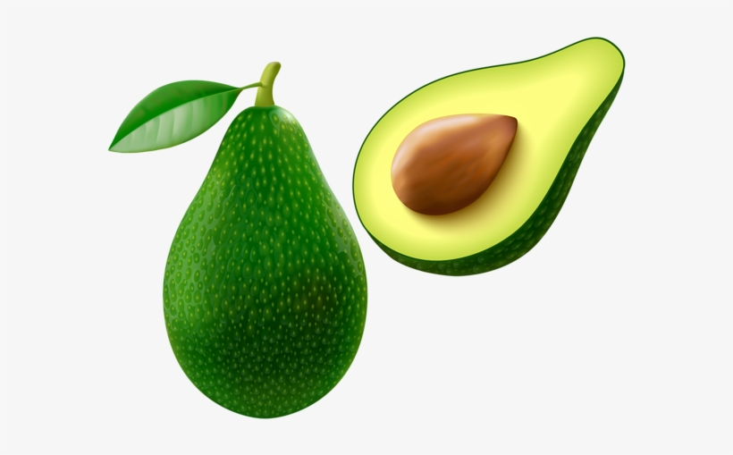 Avocado Png Vector Clipart Image.