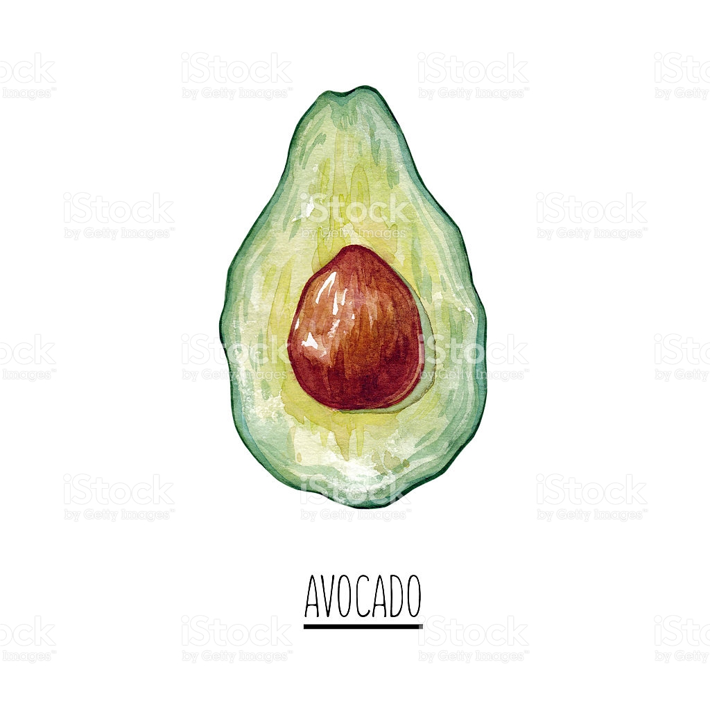 Hand Drawn Watercolor Green Avocado Clipart stock vector art.