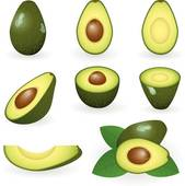 Avocado Clip Art.