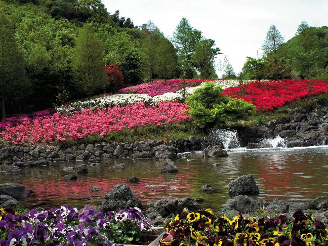 Nature & Flower】 Awaji Island Kuniumi Association.