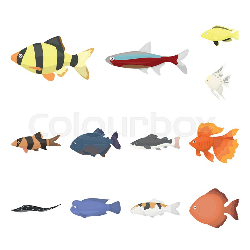 Different types of fish cartoon icons.