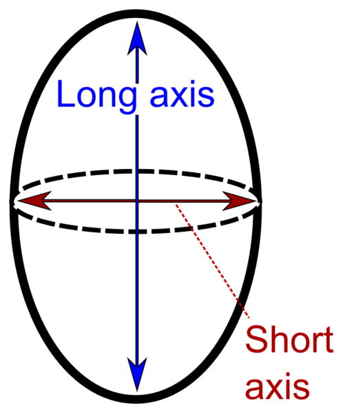 File:Long and short axis.png.