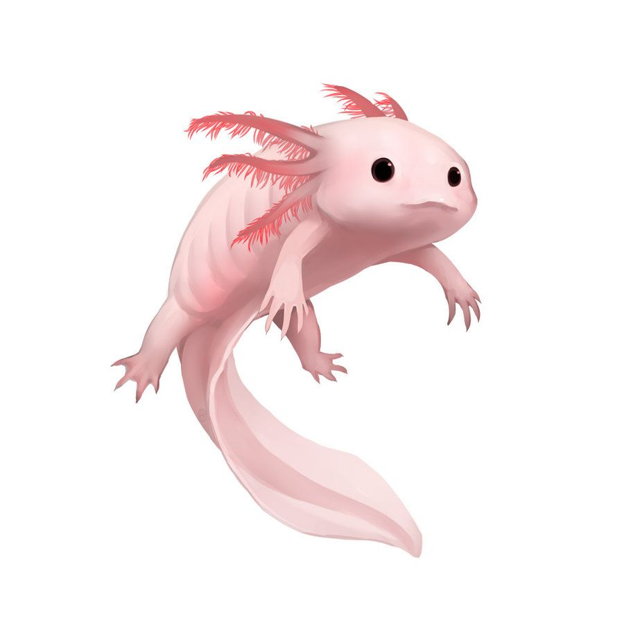 Axoloti clipart clipart images gallery for free download.