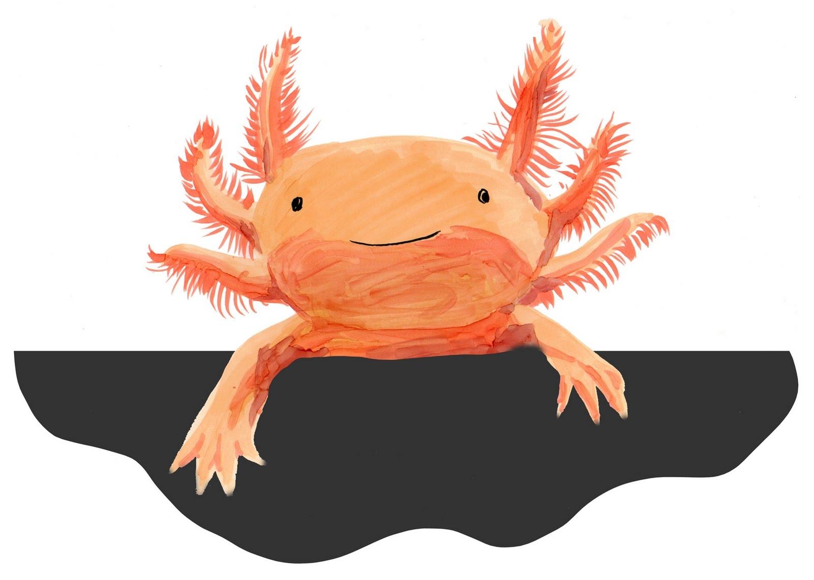 Axolotl Clipart.